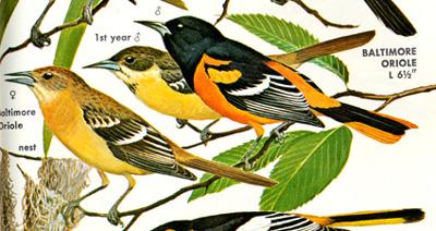 Edward Tufte forum: Visual notation of bird songs