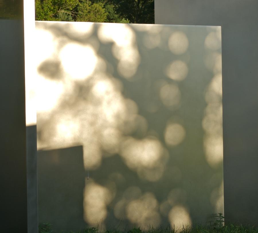 Dappled Light